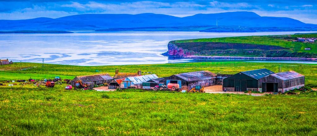 苏格兰奥克尼岛(Orkney Islands),牧场牛羊_图1-8