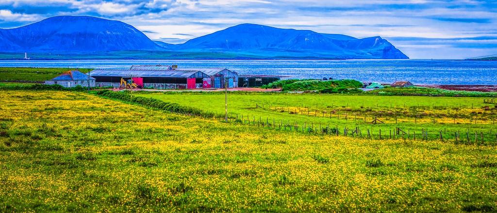 苏格兰奥克尼岛(Orkney Islands),牧场牛羊_图1-5