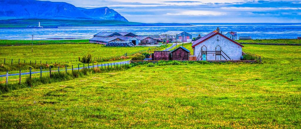 苏格兰奥克尼岛(Orkney Islands),牧场牛羊_图1-6
