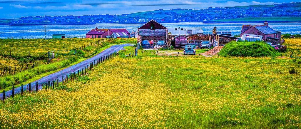 苏格兰奥克尼岛(Orkney Islands),牧场牛羊_图1-7