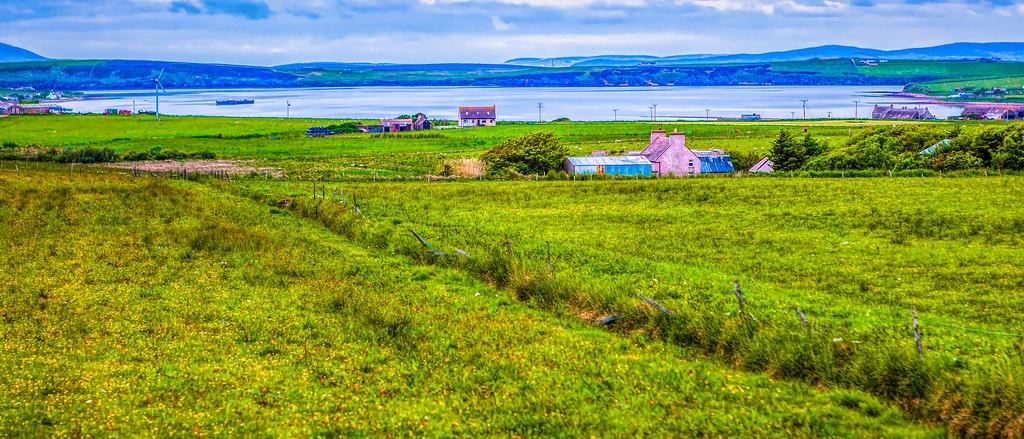 苏格兰奥克尼岛(Orkney Islands),牧场牛羊_图1-3