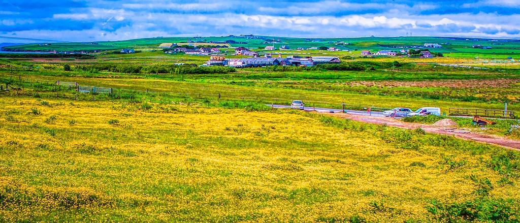 苏格兰奥克尼岛(Orkney Islands),牧场牛羊_图1-13