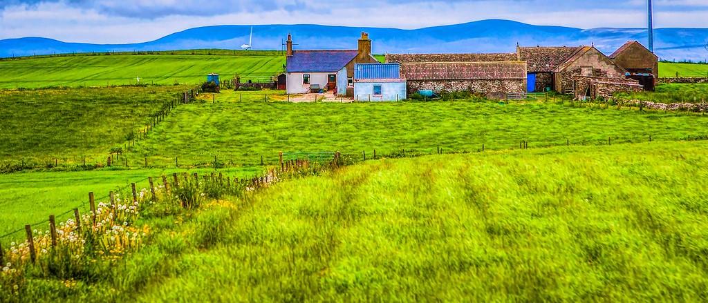 苏格兰奥克尼岛(Orkney Islands),牧场牛羊_图1-14