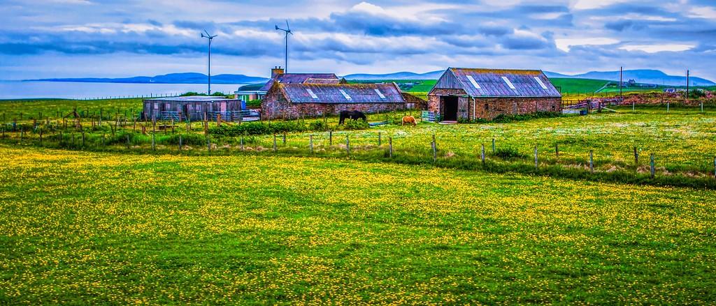 苏格兰奥克尼岛(Orkney Islands),牧场牛羊_图1-15