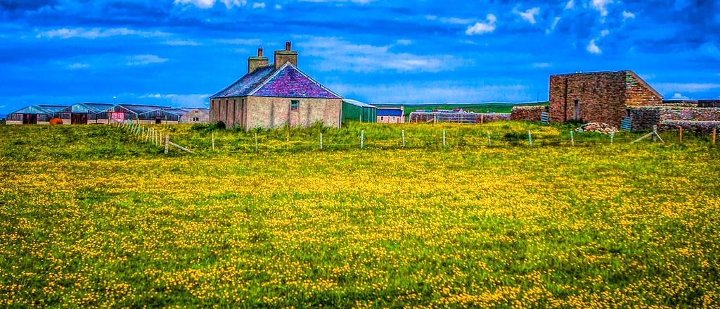 苏格兰奥克尼岛(Orkney Islands),牧场牛羊_图1-16