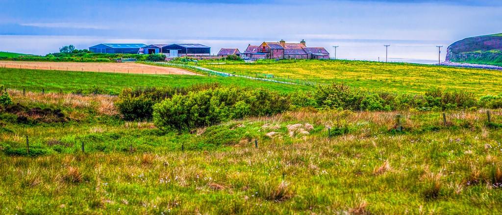苏格兰奥克尼岛(Orkney Islands),牧场牛羊_图1-17