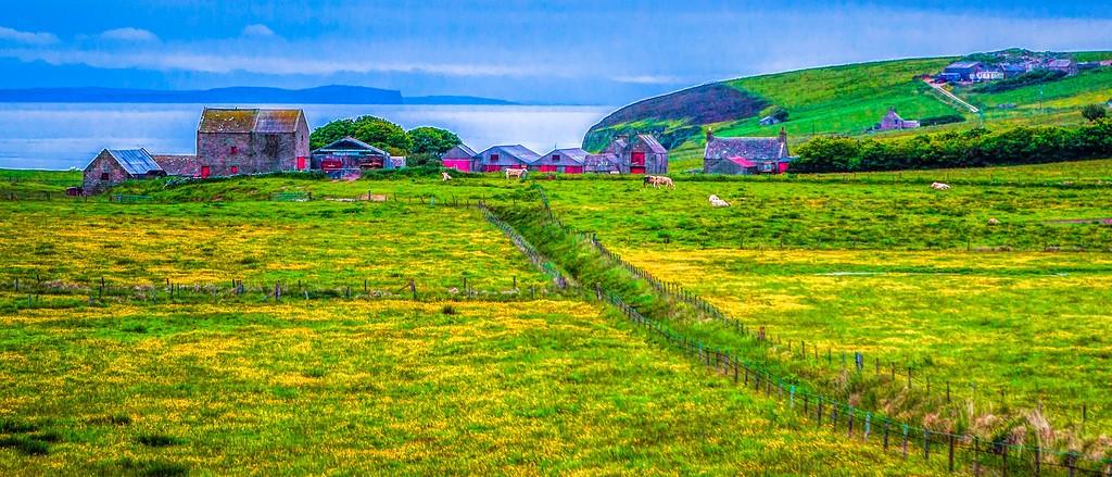 苏格兰奥克尼岛(Orkney Islands),牧场牛羊_图1-19
