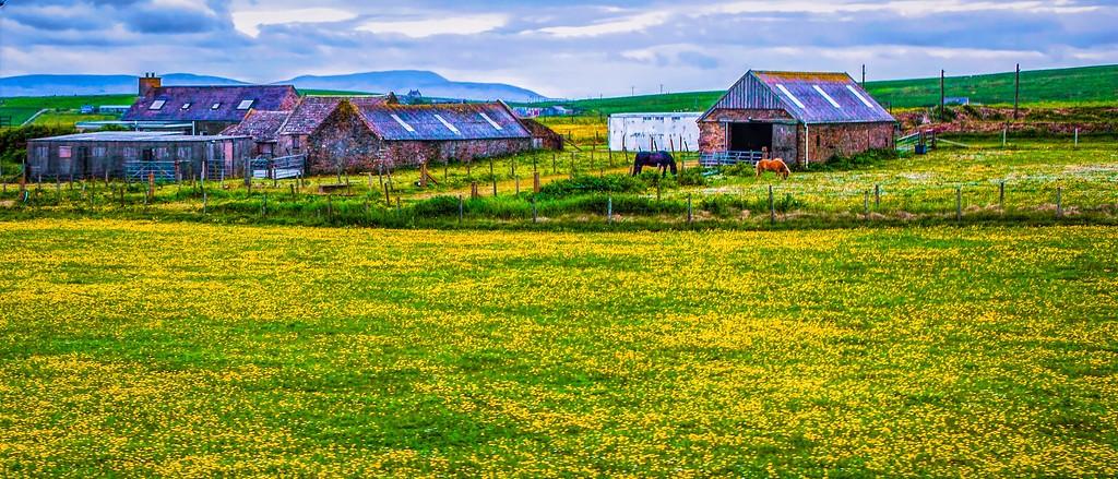 苏格兰奥克尼岛(Orkney Islands),牧场牛羊_图1-20