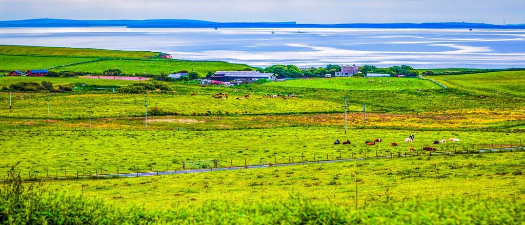 苏格兰奥克尼岛(Orkney Islands),牧场牛羊_图1-22