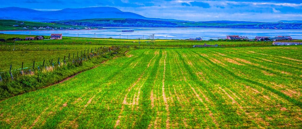 苏格兰奥克尼岛(Orkney Islands),牧场牛羊_图1-21