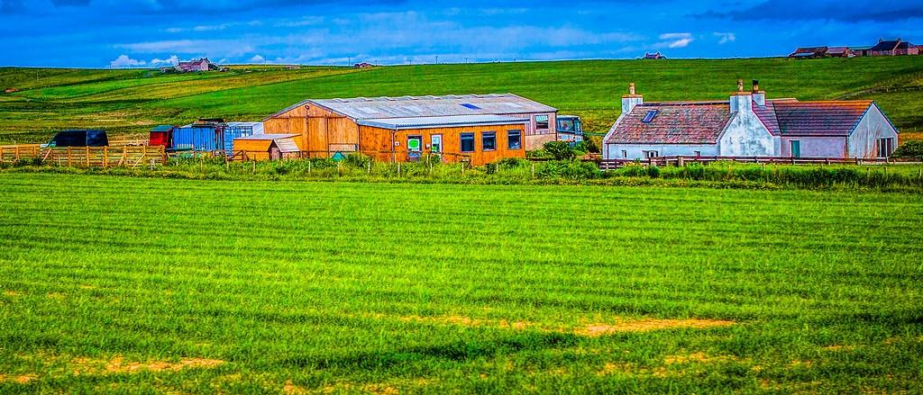 苏格兰奥克尼岛(Orkney Islands),牧场牛羊_图1-32