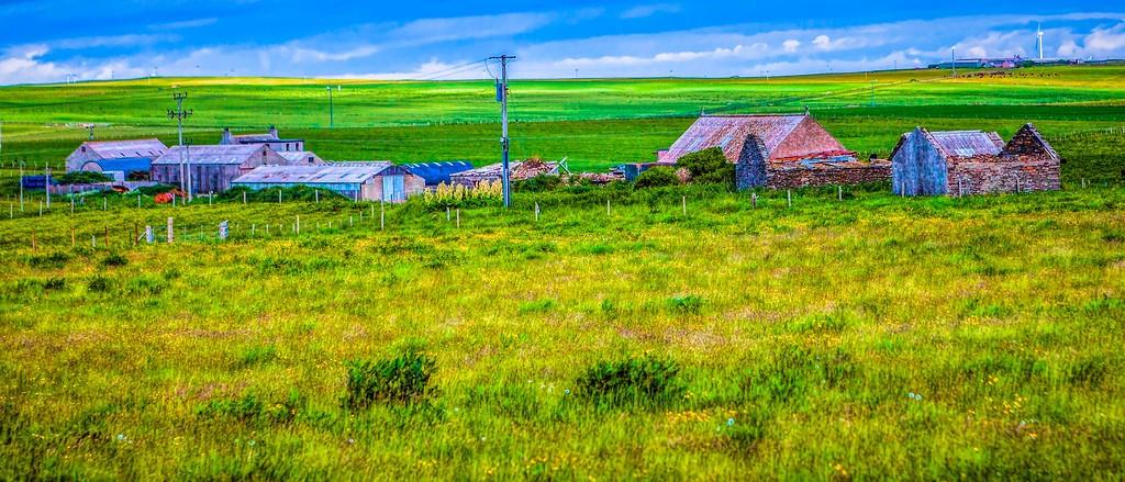 苏格兰奥克尼岛(Orkney Islands),牧场牛羊_图1-28