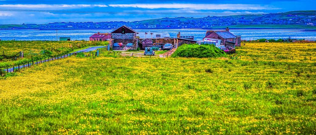 苏格兰奥克尼岛(Orkney Islands),牧场牛羊_图1-30