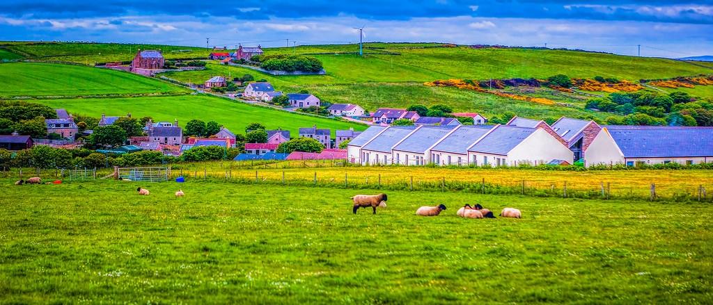 苏格兰奥克尼岛(Orkney Islands),牧场牛羊_图1-26