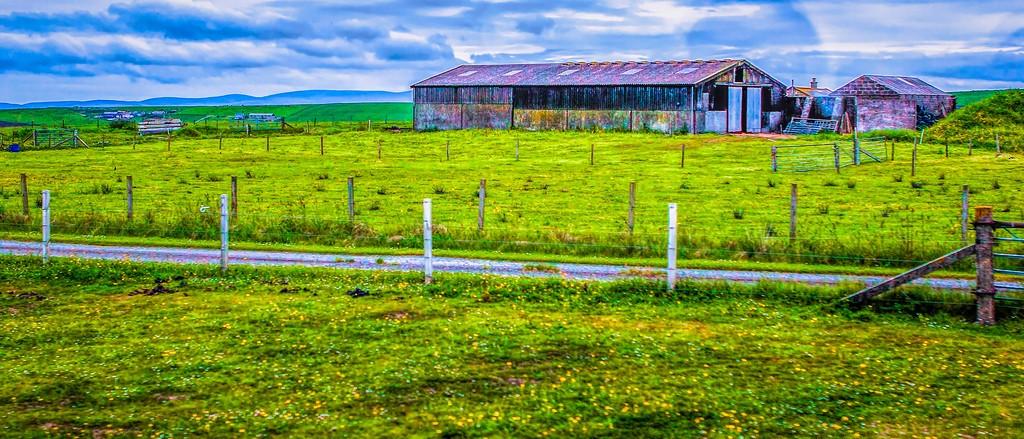 苏格兰奥克尼岛(Orkney Islands),牧场牛羊_图1-31