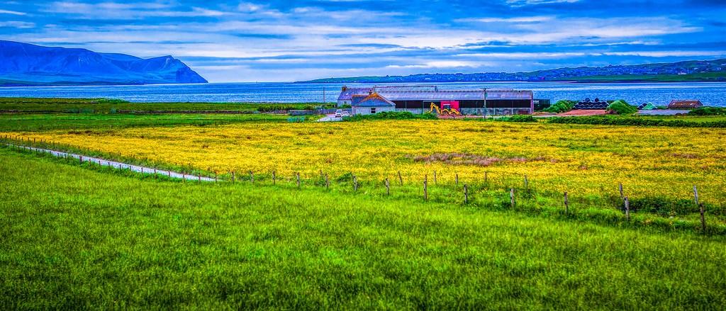 苏格兰奥克尼岛(Orkney Islands),牧场牛羊_图1-37