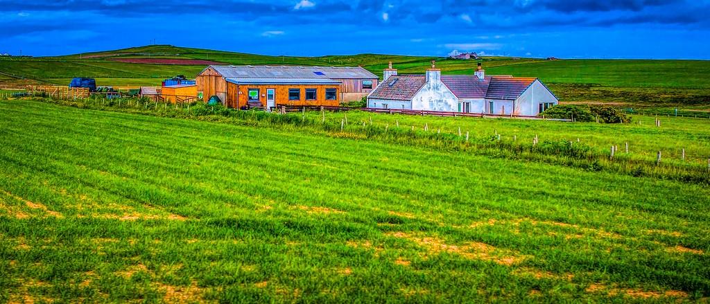 苏格兰奥克尼岛(Orkney Islands),牧场牛羊_图1-33