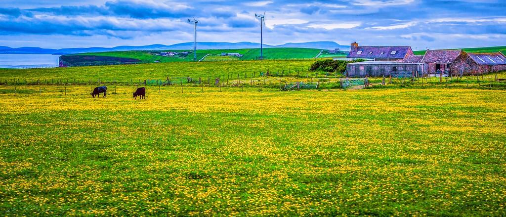 苏格兰奥克尼岛(Orkney Islands),牧场牛羊_图1-39