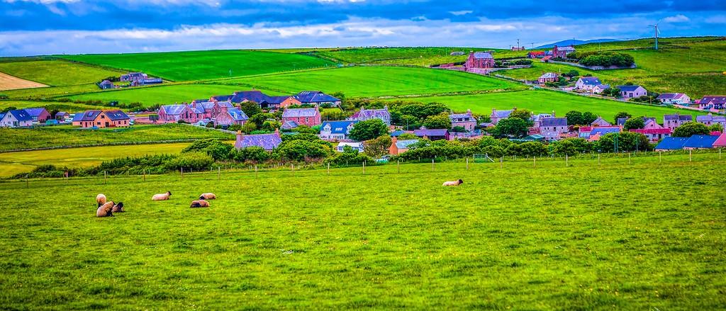 苏格兰奥克尼岛(Orkney Islands),牧场牛羊_图1-36