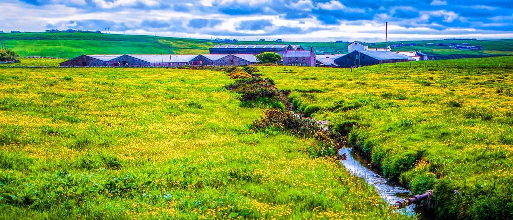 苏格兰奥克尼岛(Orkney Islands),牧场牛羊_图1-35