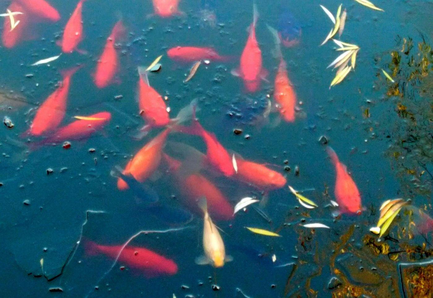 言日:子非鱼——冬景颐和园_图1-1