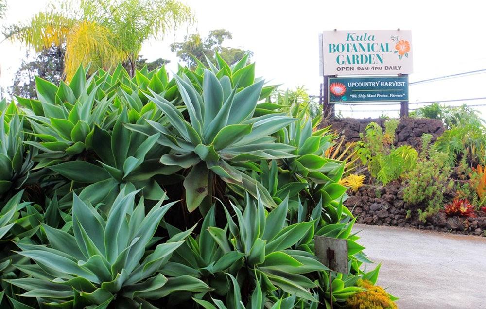 毛伊岛的库拉植物园_图1-2