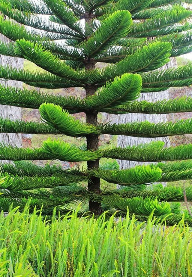 毛伊岛的库拉植物园_图1-3