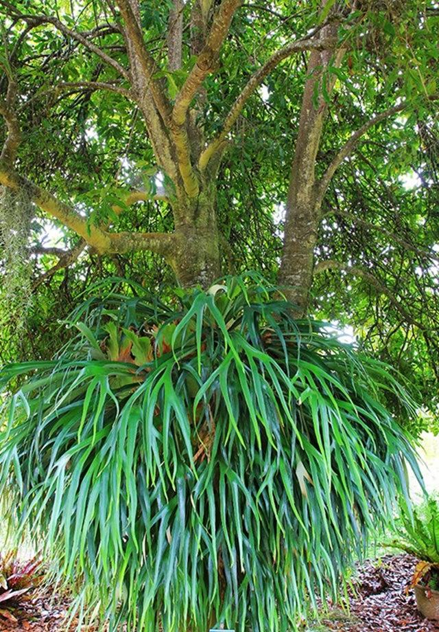 毛伊岛的库拉植物园_图1-4