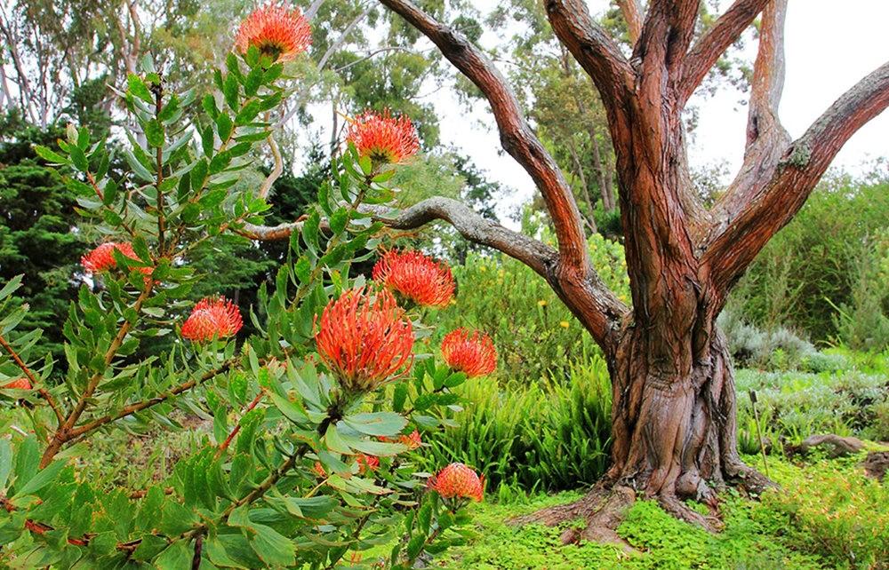 毛伊岛的库拉植物园_图1-8