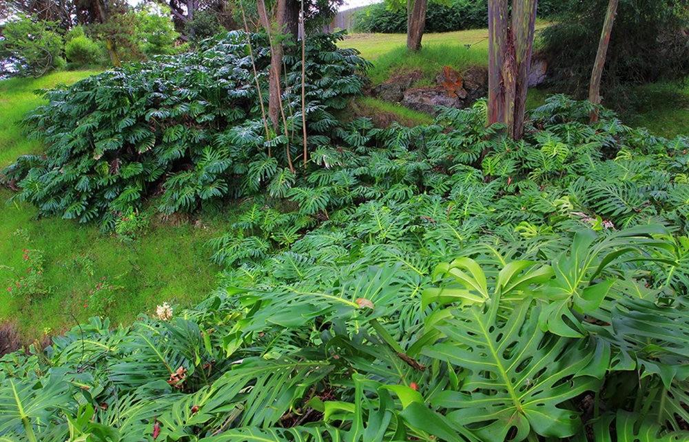 毛伊岛的库拉植物园_图1-15