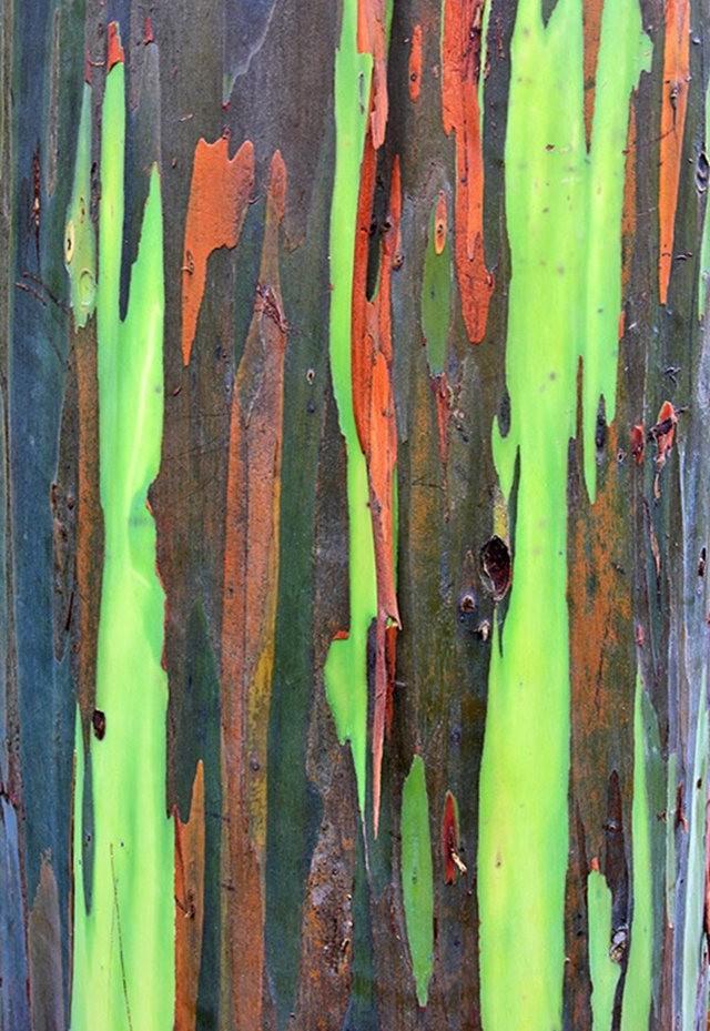 毛伊岛的库拉植物园_图1-16