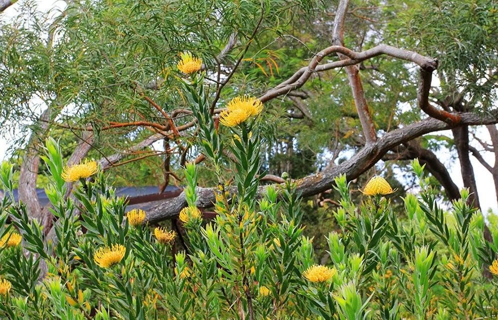 毛伊岛的库拉植物园_图1-17