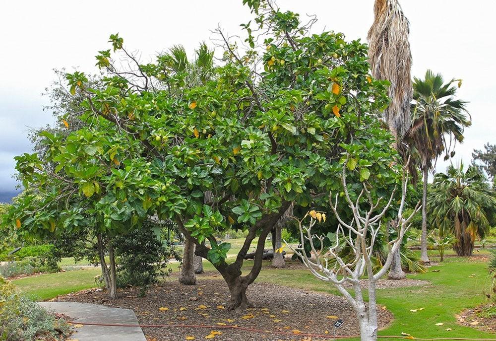 毛伊岛的库拉植物园_图1-24