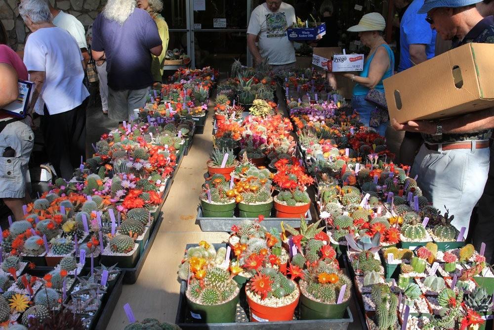 第53届萨克拉曼多仙人掌与肉质学会展览和销售_图1-3