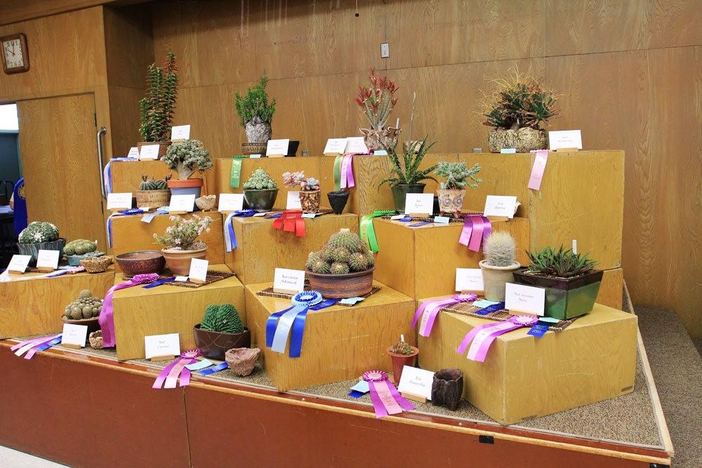 第53届萨克拉曼多仙人掌与肉质学会展览和销售---2_图1-2