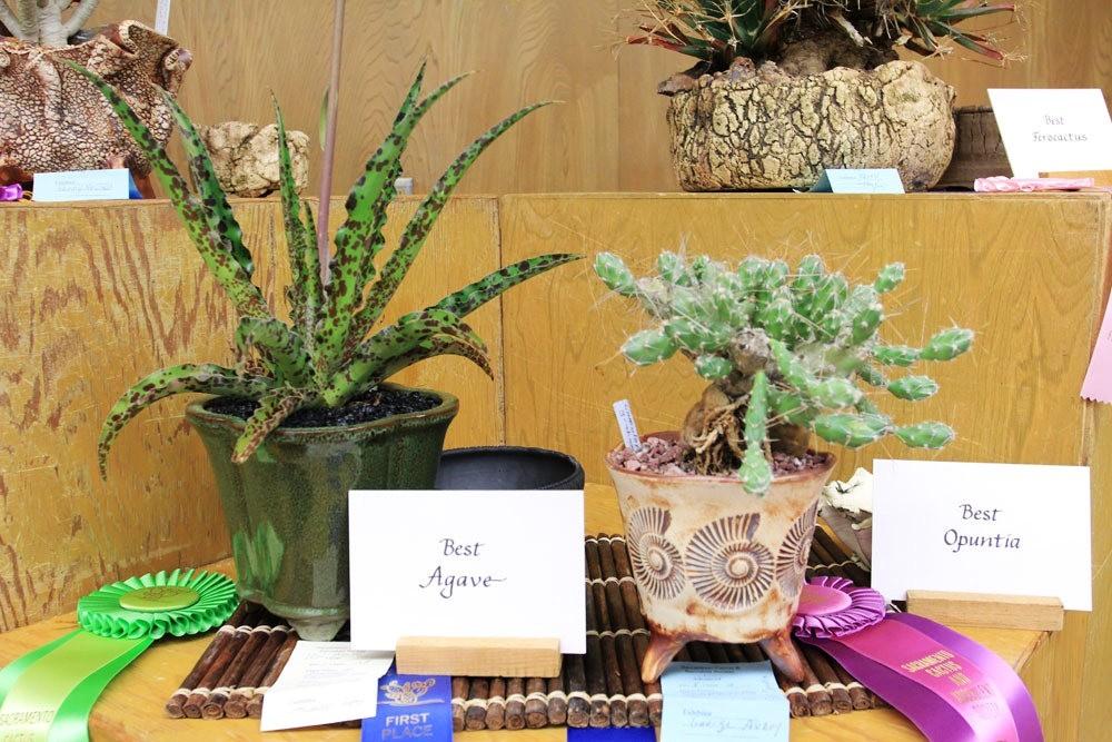 第53届萨克拉曼多仙人掌与肉质学会展览和销售---2_图1-4