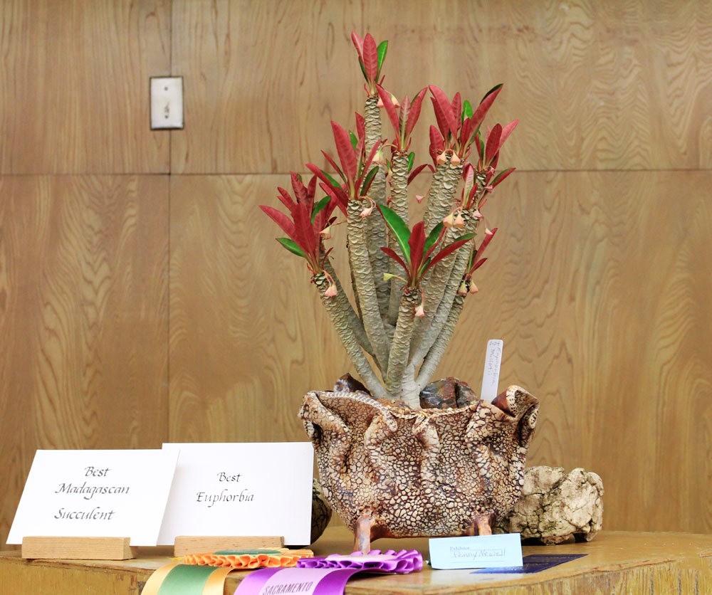 第53届萨克拉曼多仙人掌与肉质学会展览和销售---2_图1-6