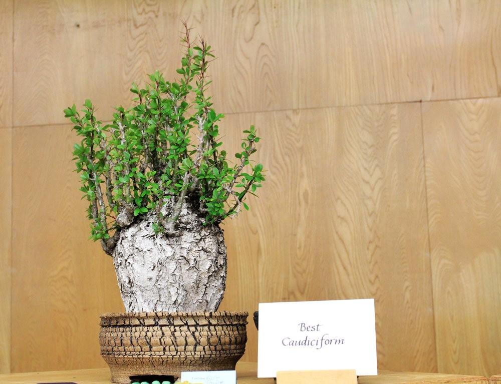 第53届萨克拉曼多仙人掌与肉质学会展览和销售---2_图1-7