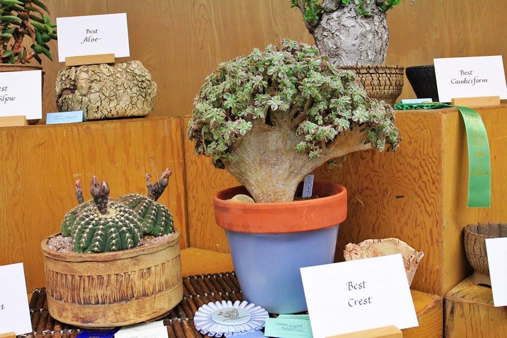 第53届萨克拉曼多仙人掌与肉质学会展览和销售---2_图1-8