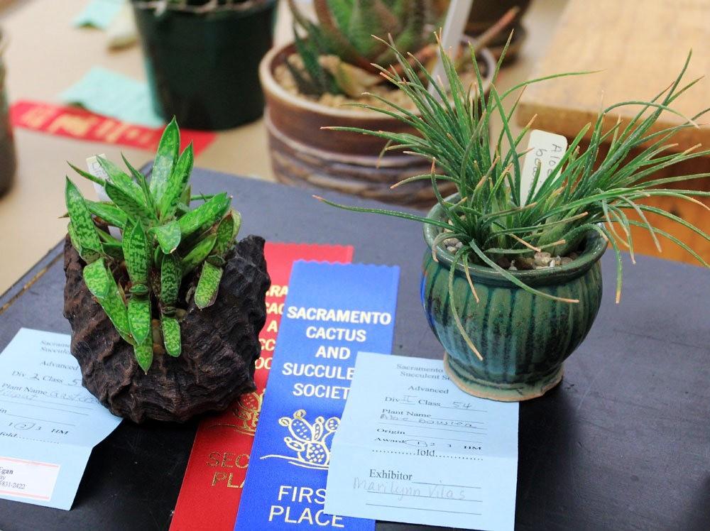 第53届萨克拉曼多仙人掌与肉质学会展览和销售---2_图1-9