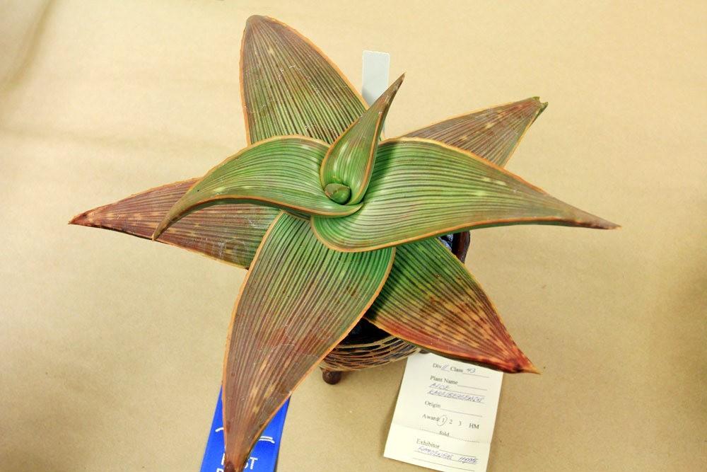 第53届萨克拉曼多仙人掌与肉质学会展览和销售---2_图1-14
