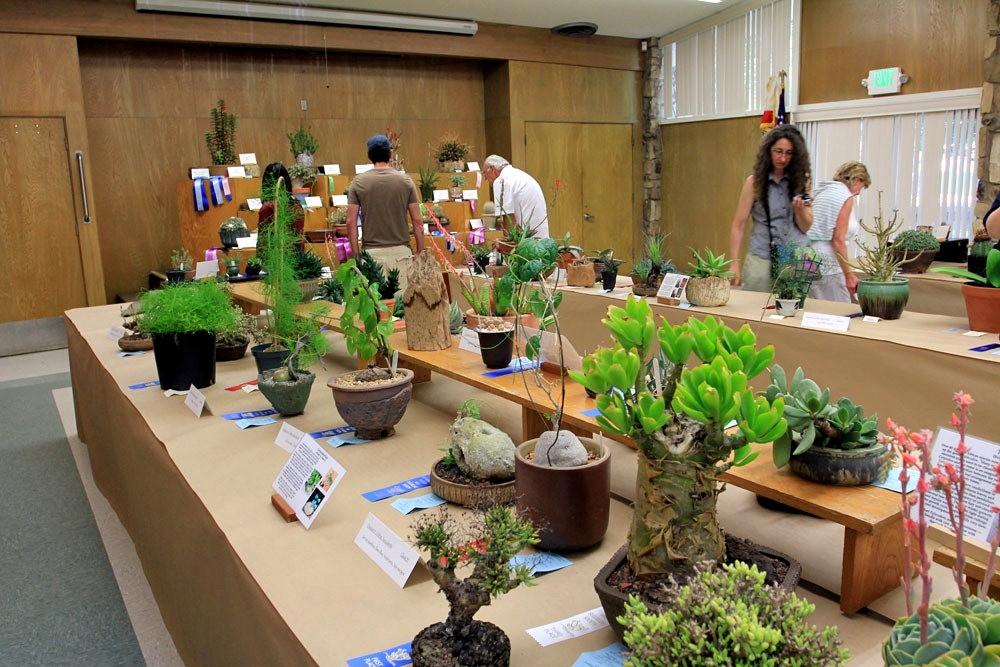第53届萨克拉曼多仙人掌与肉质学会展览和销售---2_图1-19