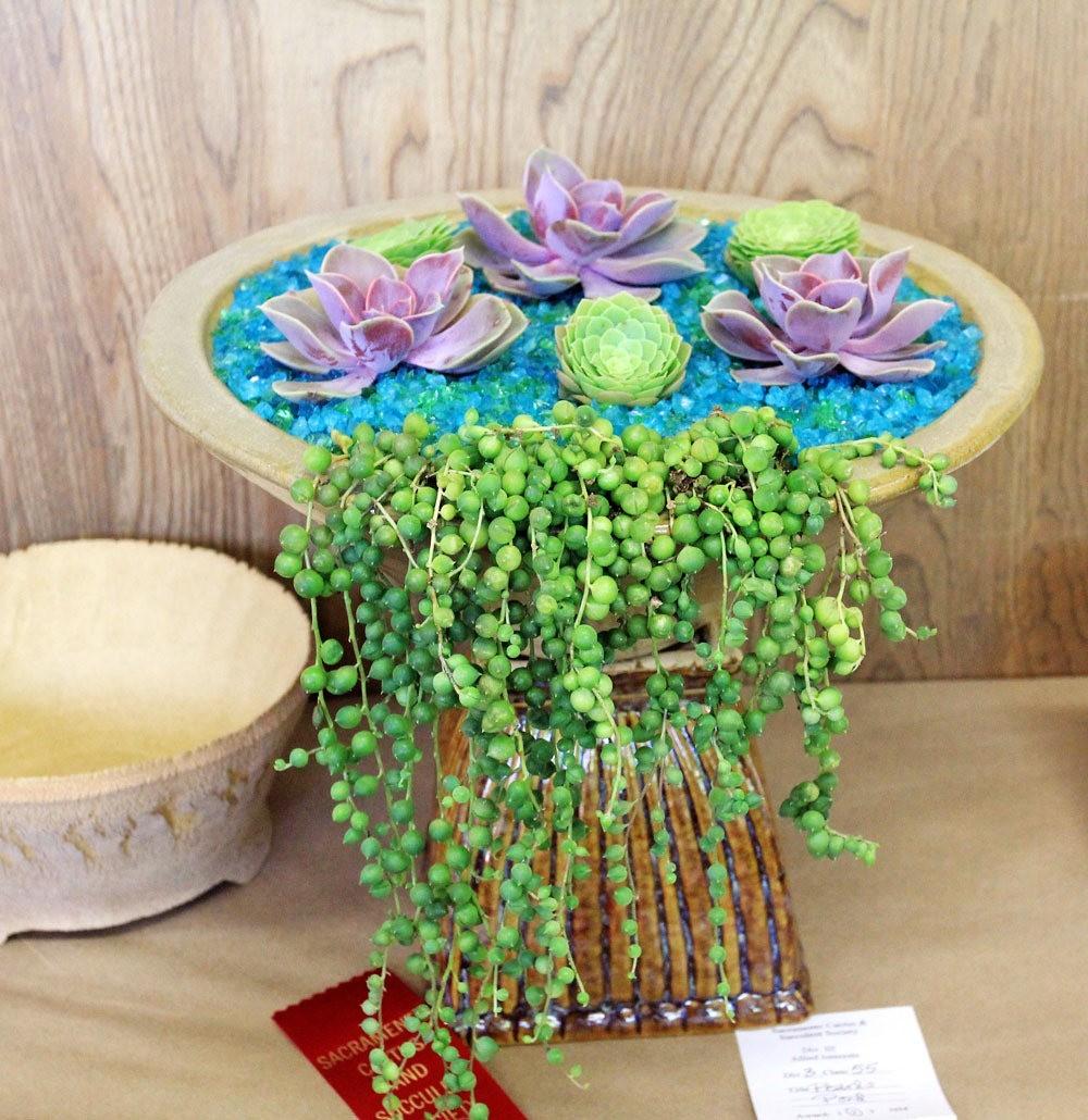 第53届萨克拉曼多仙人掌与肉质学会展览和销售---2_图1-34