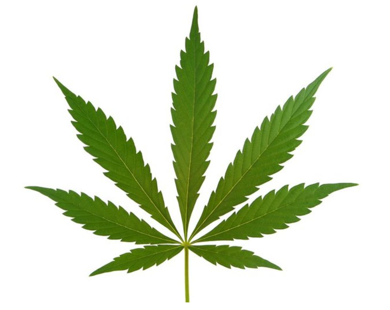美国离全国大麻合法化的日子不远了_图1-1
