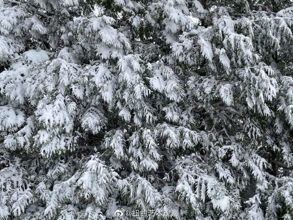 2020年12月16日纽约暴雪,郊区银装素裹_图1-7