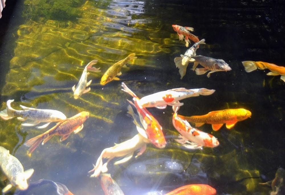 在贝尔维尤植物园徘徊_图1-26