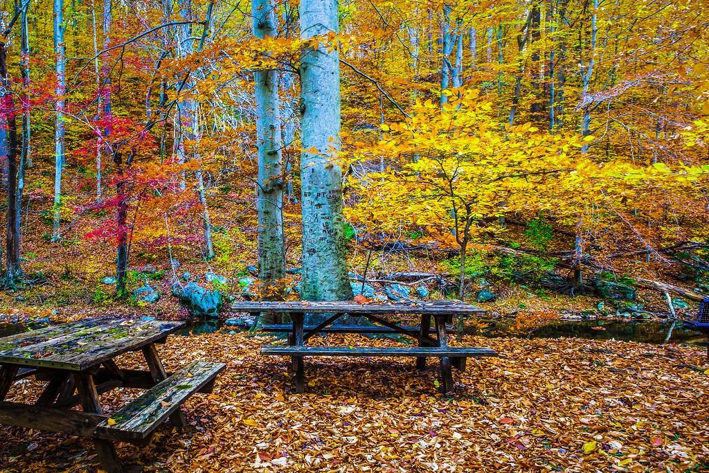 宾州雷德利克里克公园(Ridley creek park),走走看看_图1-9