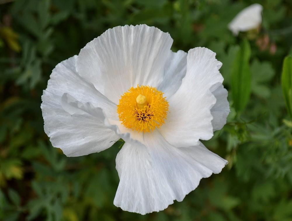 花卉日记之---4_图1-2