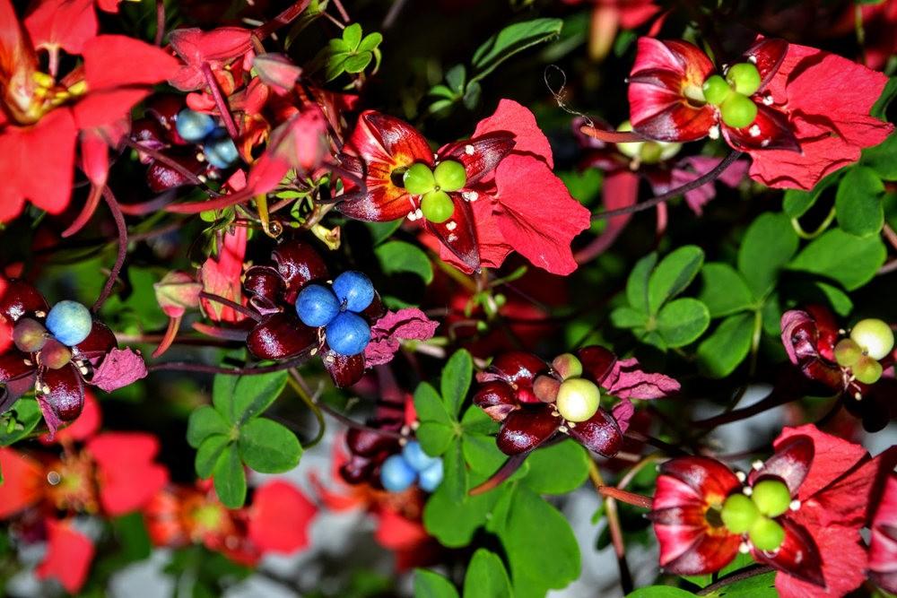 花卉日记之---4_图1-5