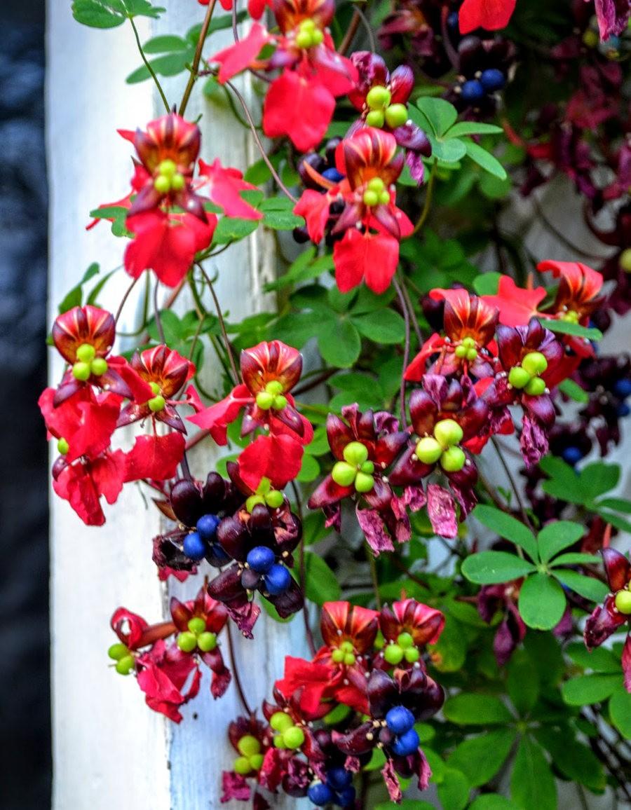 花卉日记之---4_图1-6